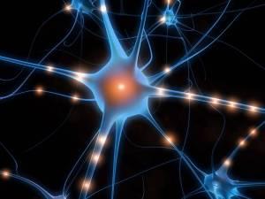 neurone-specchio